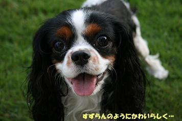 2008/07/03 その3