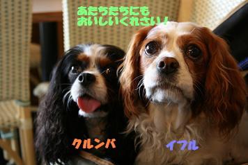 2008/06/19 その1