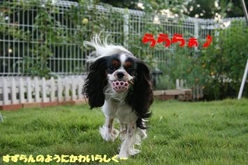 2008/07/03 その1