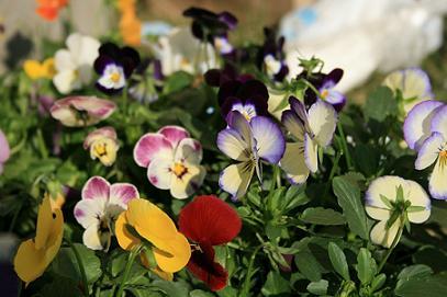 2007冬のお花たち