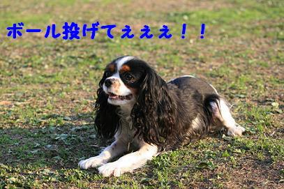 2007/11/08 その1