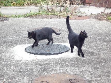 浅野駅の黒猫