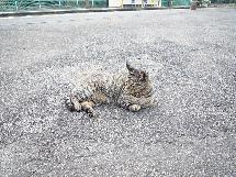 浅野駅の猫
