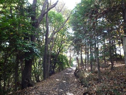成瀬尾根道1