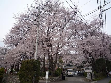 花見ポタ1