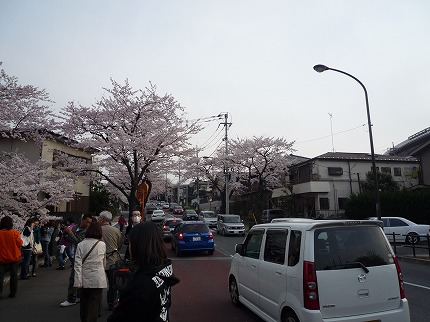 花見ポタ8