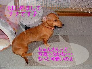 20061216130622.jpg