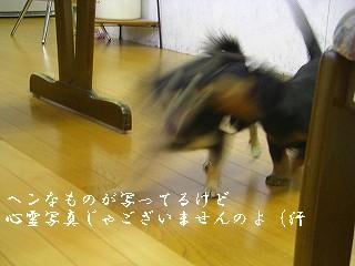 20070720190259.jpg