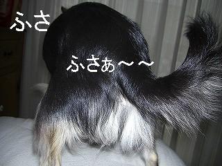 20071017110528.jpg