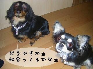 s-お揃い目線