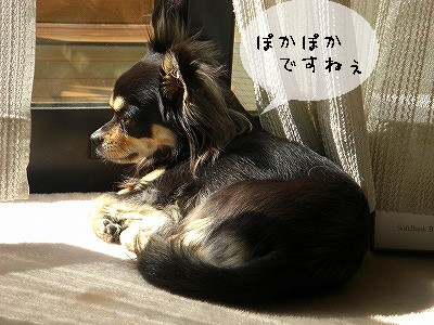 s-日向ぼっこ①