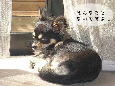 s-日向ぼっこ②
