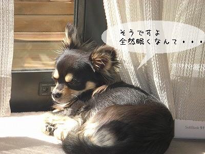 s-日向ぼっこ③