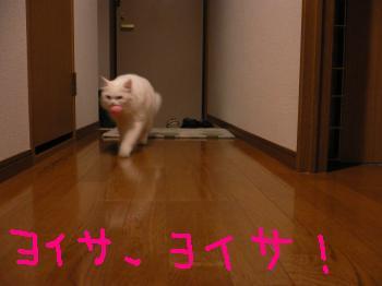 ねむキャッチ1
