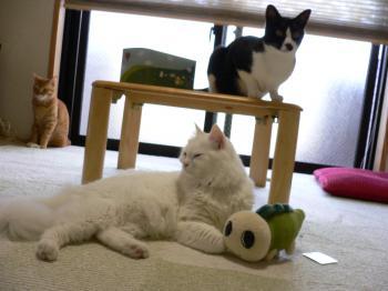 3猫となみすけ