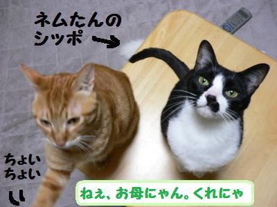 くれくれ攻撃03