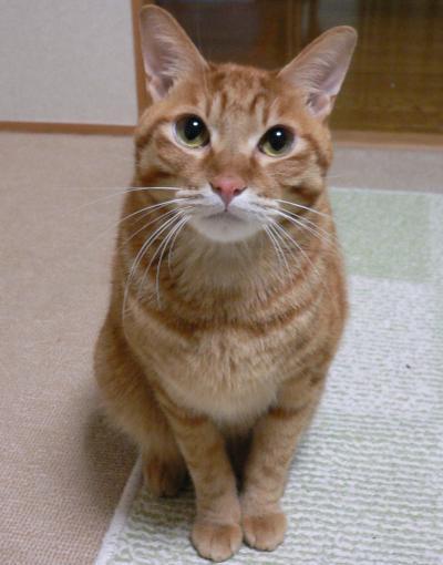 テットンは小猫01