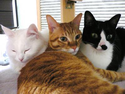 寄り添う3猫
