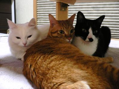 寄り添う3猫02