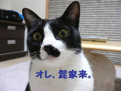 コテツ4歳02