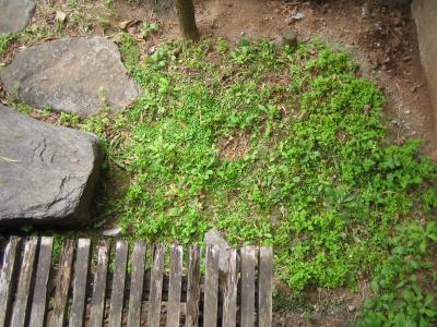 ミニ湿地帯01