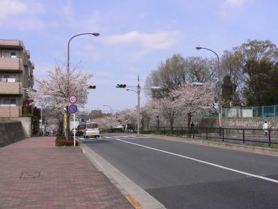 花見deピクニック02