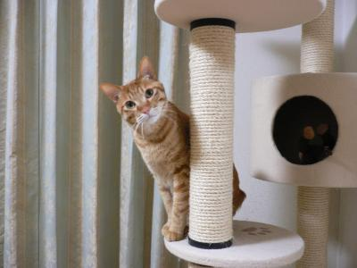 猫族タワー02