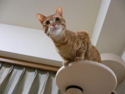 猫族タワー03