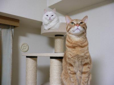 猫族タワー01