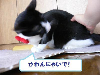 タキシードに仮面03