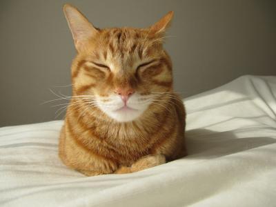 休日の猫03
