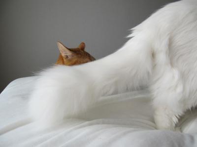 休日の猫04