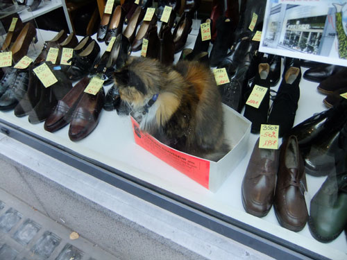 靴箱の中のネコ