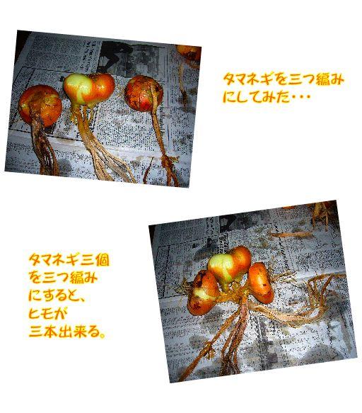 driedfood2.jpg