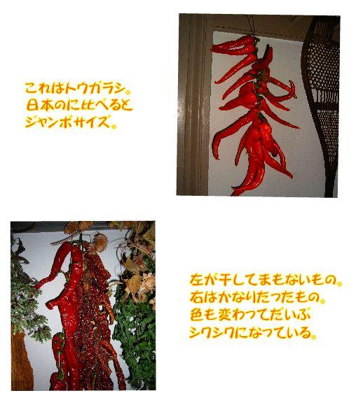 driedfood5.jpg