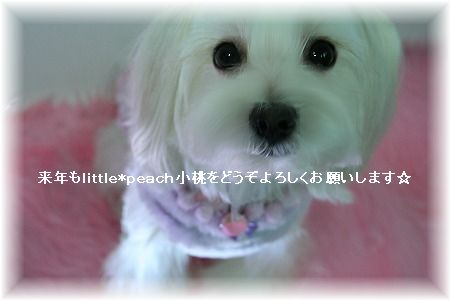 s-Img_9795ii.jpg