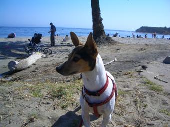 po_beach01.jpg