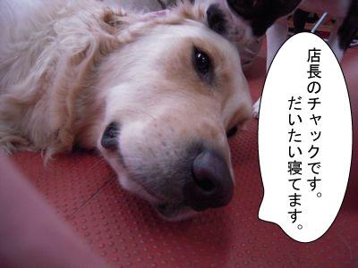 gazou-009.jpg
