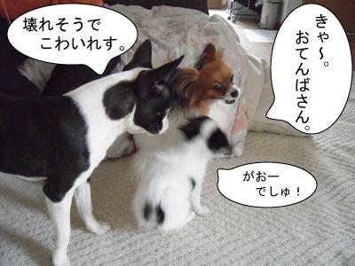 gazou-021987611.jpg