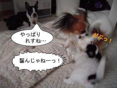 gazou-0269876.jpg