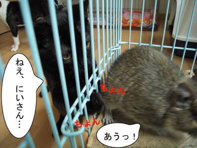 gazou-0623644.jpg