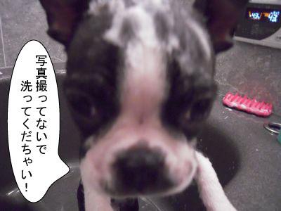 gazou-2011.jpg
