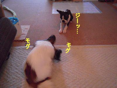 gazou-2041.jpg