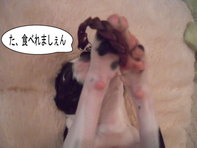 gazou-32163841.jpg