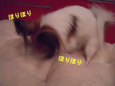 gazou-3251.jpg