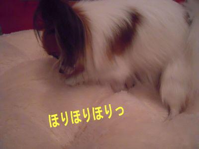 gazou-3261.jpg