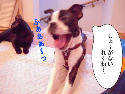 gazou-36794884.jpg