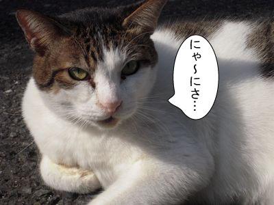 gazou-3761.jpg