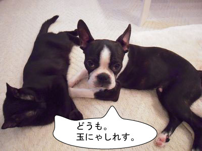 gazou-39068719848.jpg