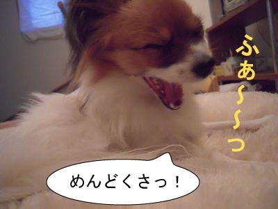 gazou-4406818425.jpg